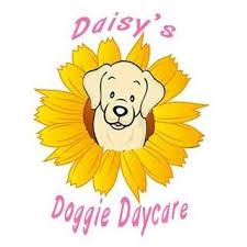 Daisy's Doggie Daycare.jpg
